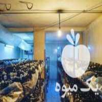 فروش پرورش قارچ در قائم شهر