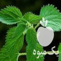 فروش گیاهان دارویی در ورزقان