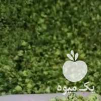 فروش پودر پسته کرمان در تهران