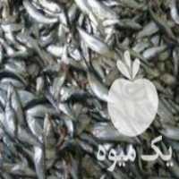 خریدار ضایعات ماهی در اندیشه
