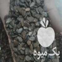 فروش بزرهندوانه دسته دو در تهران