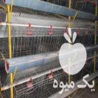 فروش قفس مرغ تخمگذار در کرمانشاه