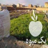 فروش نهال گوجه و بادمجان و فلفل در مشهد