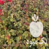 فروش تولید و عرضه انواع گل و گیاه زینتی و فضای باز در محلات