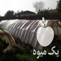 فروش نهال هندوانه گالری جامبو در تبریز