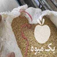 خریدار جو ذرت برای دام و گوسفند در اصفهان