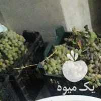 فروش انگور همدان