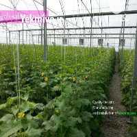 فروش ساخت گلخانه طرح اسپانیای در تهران