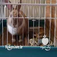 فروش دیگر حیوانات اهلی میکس در کرج