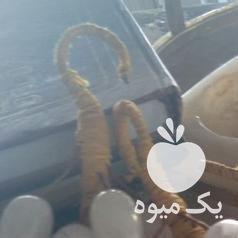 فروش انگور سنگی با سنگ مرمر در تهران در گروه خرید فروش عمده انگور - یاقوتی شانی عسگری بی دانه قرمز در یکمیوه -عکس1