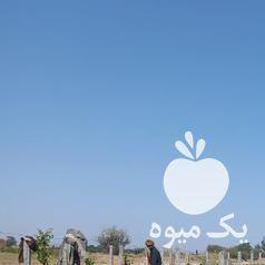فروش پایه بتنی فنس و داربست انگور بتونی در قزوین در گروه خرید فروش عمده انگور - یاقوتی شانی عسگری بی دانه قرمز در یکمیوه -عکس1