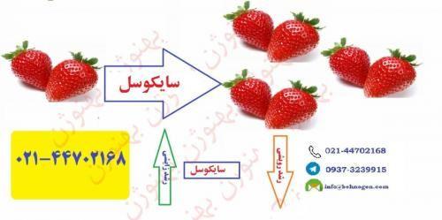 فروش سایکوسل Cycocel در تهران در گروه خرید و فروش عمده انواع محصولات کشاورزی و دامداری در یکمیوه -عکس1