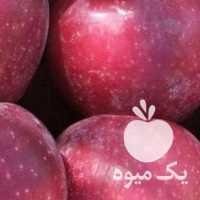 فروش سیب مرگور در سردخانه در ارومیه