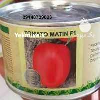 فروش بذر گوجه فرنگی متینF 1 در فارس