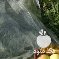 فروش چهار تن سیب سفید دو تن قرمز بودن بدون خرابی در ارومیه