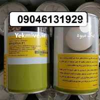 فروش بذر پیاز مینروا سفید و زودرس در تهران