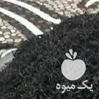 فروش عرضه مستقیم چای بهاره 1400 لاهیجان در گیلان