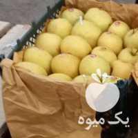 فروش سیب دو ردیف 45 تن کلازرد اماده بارگیری در ارومیه
