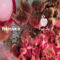 فروش فروش جوجه غاز محلی   در زنجان