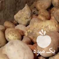 فروش سیب زمینی در اردبیل