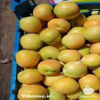 فروش زرد آلو در اصفهان در گروه خرید فروش عمده زردآلو - شاهرودی بادامی شکرپاره نصیری در یکمیوه
