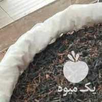 فروش کلی و جزعی چای بهاره 1400 لاهیجان در گیلان در گروه خرید فروش عمده گیاهان زینتی - گرمسیری آپارتمانی باغچه آب در یکمیوه